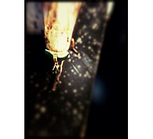 Bug Looking Fly Photographic Print