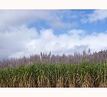 Sugarcane fields, Mackay, Nth Qld by ROB51