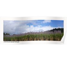 Sugarcane fields, Mackay, Nth Qld Poster