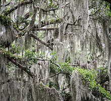 Spanish Moss by eegibson