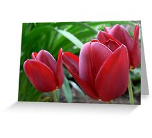 tulips-red Greeting Card