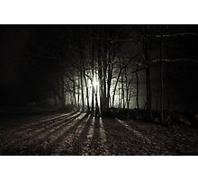 Nocturnal Luminescence Photographic Print