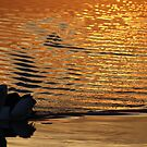"""on golden pond"" - well, St Helens bay.... by gaylene"