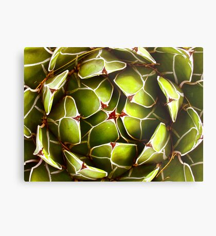 """""""Nature's Abstract Patterns"""" Metal Print"""