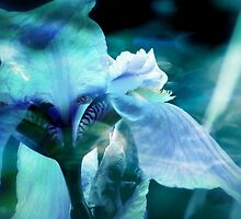 Blue Iris by Debra Kannair