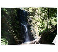 Falls at Big Basin Poster