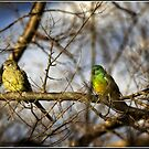 Two birds in a tree enjoying the late afternoon by Wolf Sverak