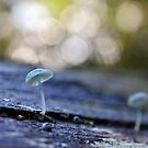 little blue mushroom by gmws