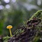 little yellow mushroom by gmws