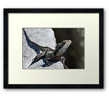 Who says dragons are extinct ? Framed Print