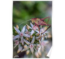 Grasshopper on Flowers Poster