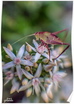 Grasshopper on Flowers by yolanda