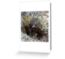 Spiny Greeting Card