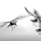 Tynemouth Gulls by Andrew Pounder