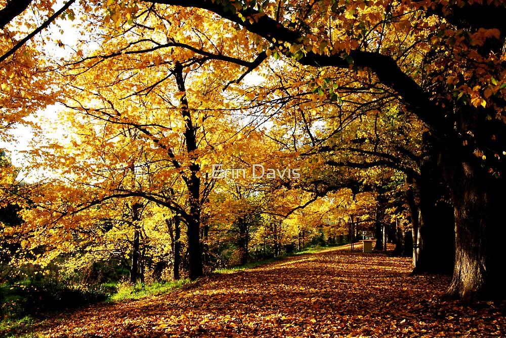 Autumn Enchantment No. 2 ... by Erin Davis