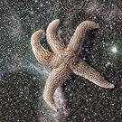 Star Fish by Steve