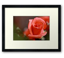 peach hybrid tea rosebud Framed Print