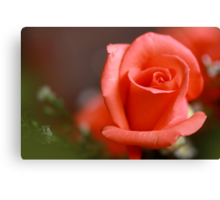 peach hybrid tea rosebud Canvas Print