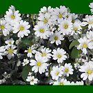 1605-beautiful flowers by elvira1