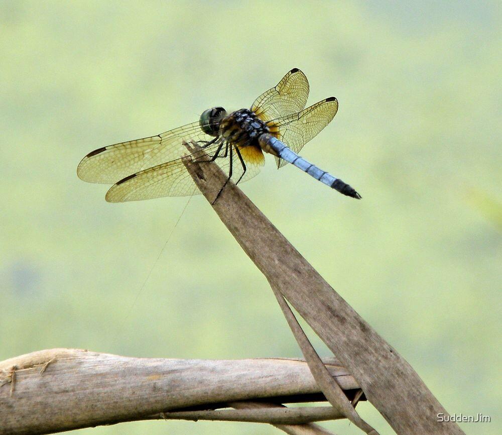 Dragonfly by SuddenJim