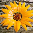1607-beautiful yellow flower by elvira1