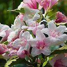 1617-pink flowers by elvira1