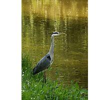 Heron Statue Photographic Print