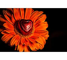 Rare Breed of Gerbera Photographic Print