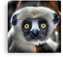 Coquerel's Sifaka Canvas Print