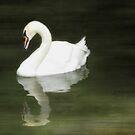 Swan Reflected by Lea  Weikert