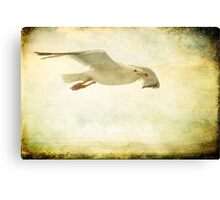 Just Fly  Canvas Print