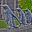 March of the Penguins by dgscotland