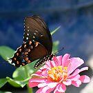 Wings of Beauty by autumnwind