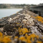 Old Penneshaw Jetty by Lochlan Rovina