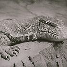 Monitor Lizard Drawing by Paul Fearn