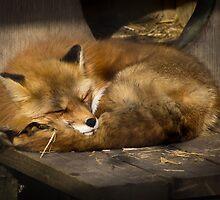 Sleepy fox by photogaet