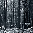 Forest Bloom by Peter Stratton
