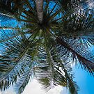 Palm Tree by bungeecow