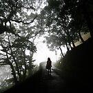 capturing mist by Chris Zissiadis