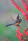 Eastern Spinebill and Victorias floral emblem by Donovan wilson