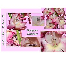 Gorgeous Gladiolus! Photographic Print