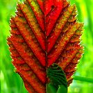 Indian Summer Leaf by ©The Creative  Minds