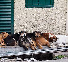 Darjeeling Dogs by BradBaker