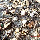 Roadside Seashells by swiftwolf