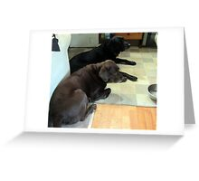 my dog jake with his friend roy whos come to stay Greeting Card
