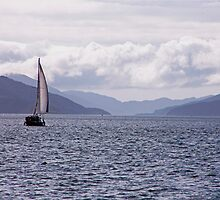 Out For A Sail by phil decocco