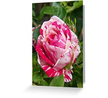 The Rose .. Hanky Panky Greeting Card
