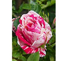 The Rose .. Hanky Panky Photographic Print