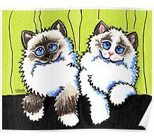 Pair of Dolls | Ragdoll Cats Poster