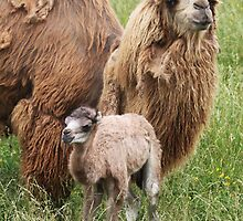 A Mother's Protection by Michelle Kempf